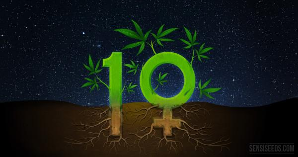 10-interesting-facts-about-feminized-seeds_4K-600x316