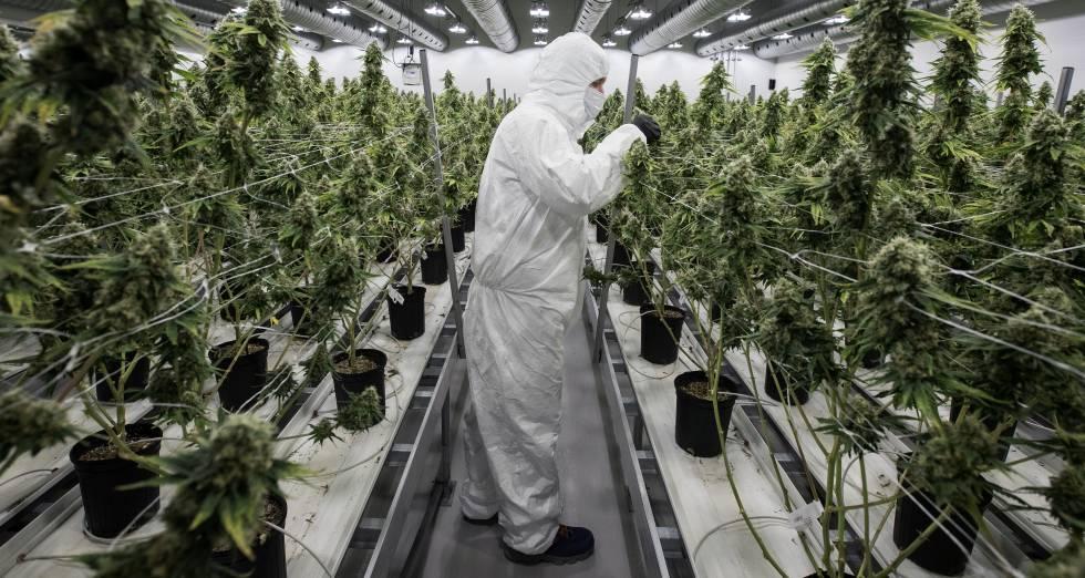 la industria del cannabis en EE.UU creara mas empleos que nunca antes del 2021