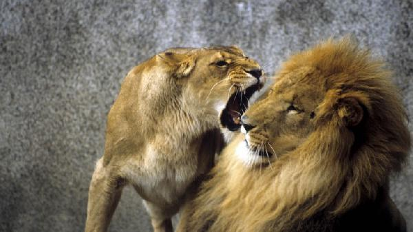 Are-you-being-aggressive-12-signs-of-aggression-you-need-to-recognise-780x438