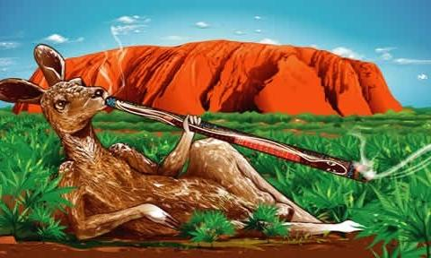 Australia-Moves-One-Step-Closer-to-Legalizing-Medical-Marijuana-e1445145561360-480x288