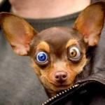 Cute-Funny-Dog-2012-12-1-150x150