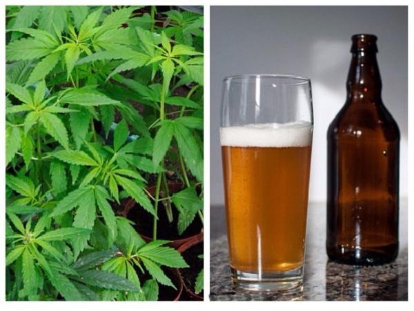 El-alcohol-es-114-veces-mas-mortifero-que-la-substancia-de-la-marihuanajpgjpg-1024x769-590x443
