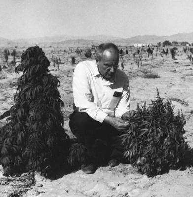 Figure-2-Richard-Evans-Schultes-with-C-indica-ssp-afghanica-broad-leaf-drug-or-BLD-plants-in-Afghanistan-588x600
