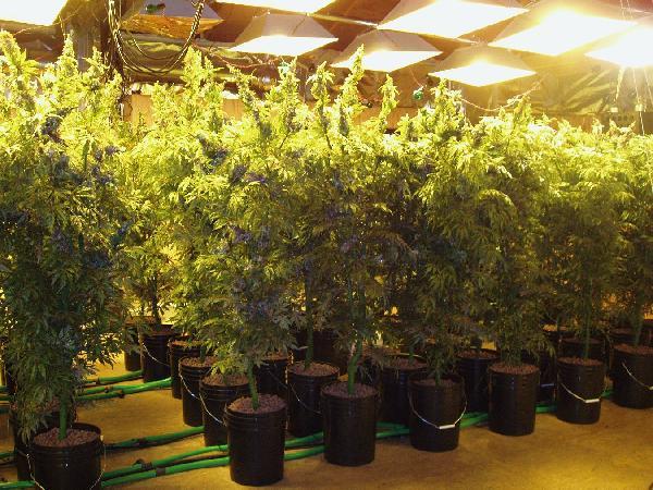 Growhouse-tall-plants-9