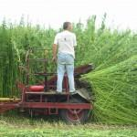 Harvest-w-tractor04-150x150