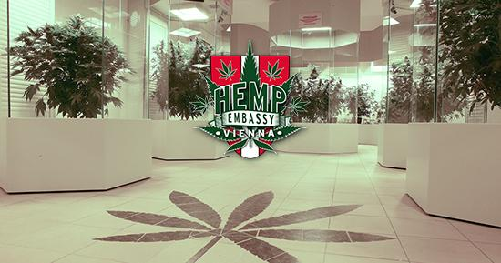 Hemp-embassy-Sensi-Seeds-blog-II