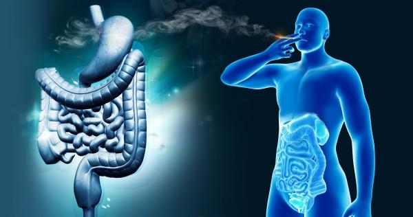 How-cannabis-can-affect-the-digestive-system-in-both-positive-and-negative-ways-Sensi-Seeds-blog-600x316