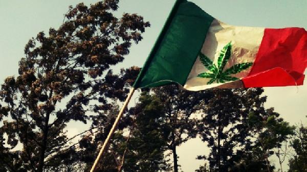 Mexico-marihuana-960x623-1-780x438