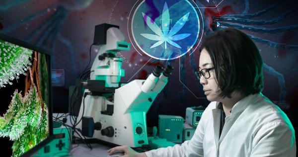 National-Cancer-Institute-Cannabis-as-cancer-treatment-00-Sensi-Seeds-blog-600x316