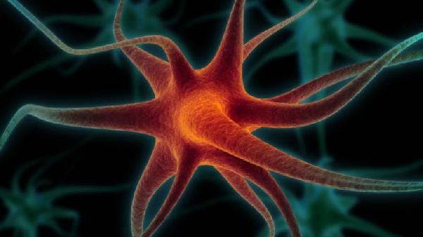 Neuron-birth-780x438