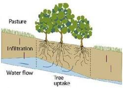 Soil-3-250x178