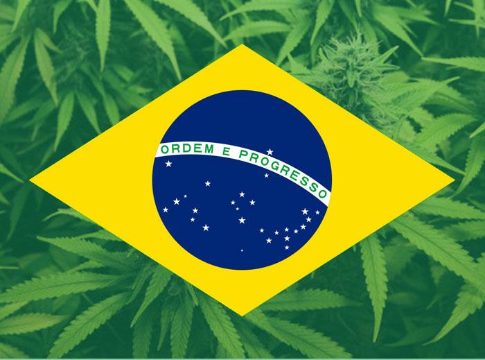 Brasil comienza los trámites para preparar su ley a favor del CBD
