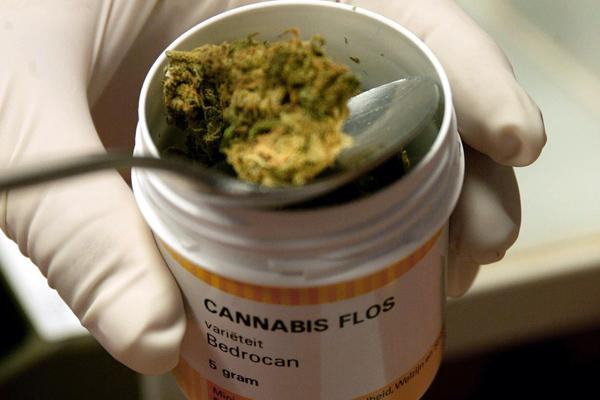 cannabis_13436