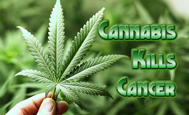 La cuarta parte de los enfermos de cancer ya consumen cannabis