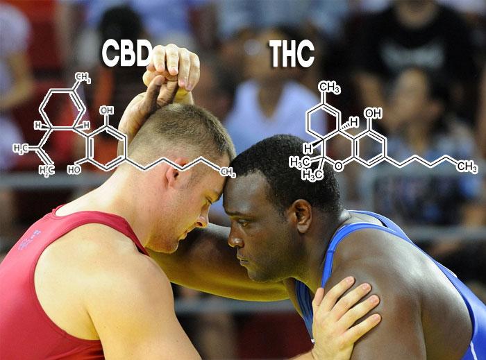 CBD vs THC diferencias entre los principales cannabinoides