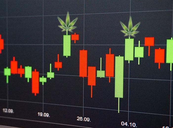 Cosas a tener en cuenta si quieres invertir en cannabis