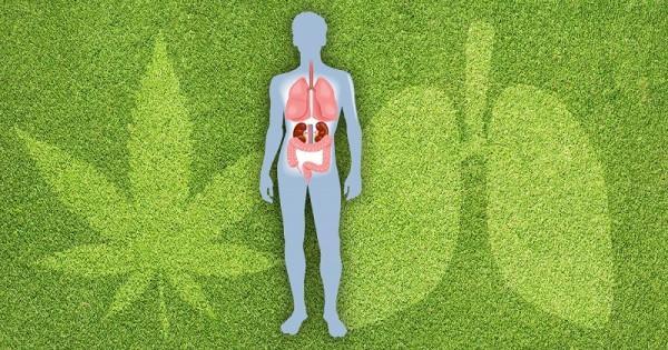 cystic-fibrosis-Sensi-Seeds-blog-600x315