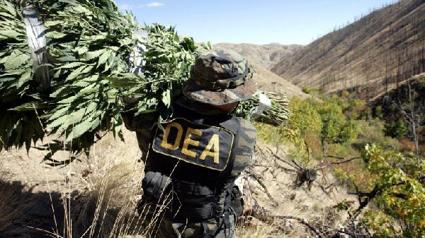 dea-not-bothering-stoners-780x438