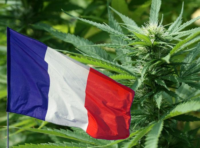 En Francia la legalización del cannabis cada vez es más popular