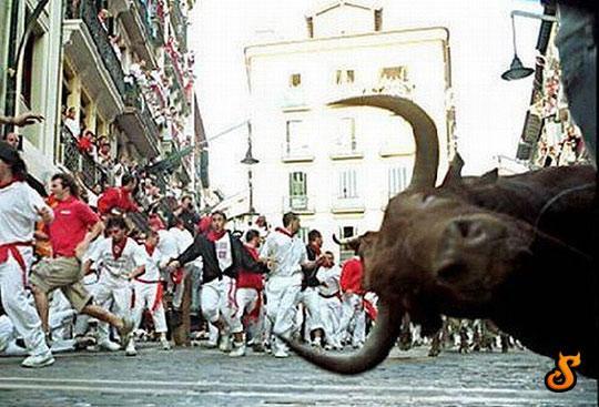 funny-bull-photobomb-Spain-1