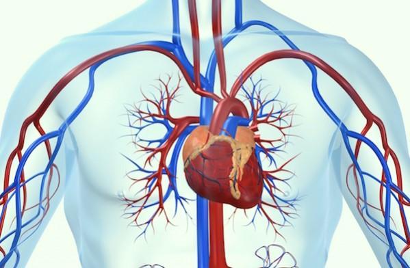 heart-disease-cannabis-599x392