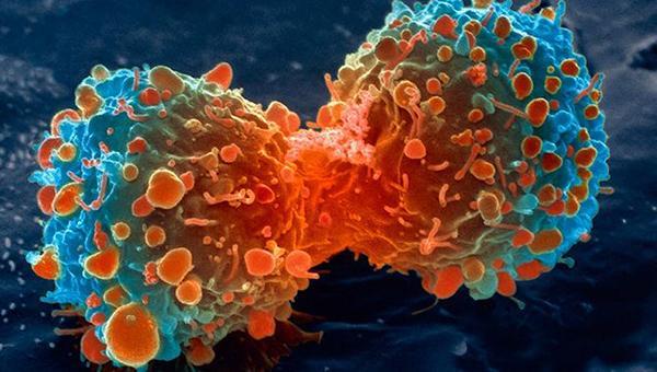 El cannabis mata las células cancerosas