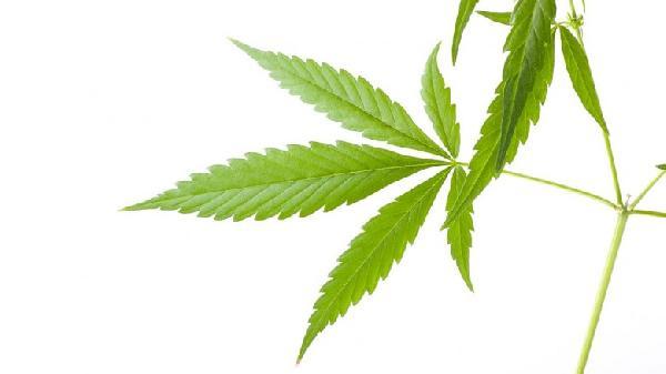marihuana-rama-780x438