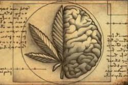 Un nuevo estudio aclara que no existe asociación entre el cannabis y los comportamentos suicidas de las personas con trastornos psiquiátricos.