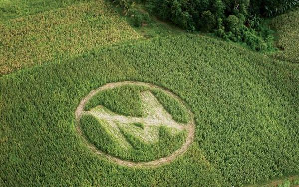 monsanto-marijuana-mapping