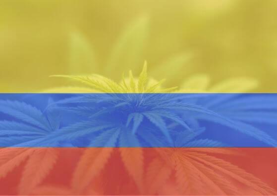 EL CANNABIS MEDICINAL FLORECE EN COLOMBIA