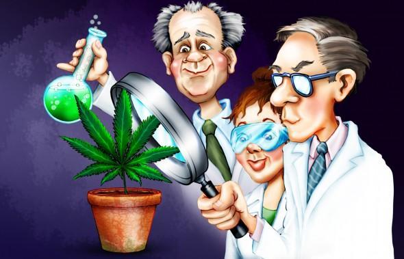 pot-marijuana-science-cartoon-hbtv-hemp-beach-tv-2-590x379