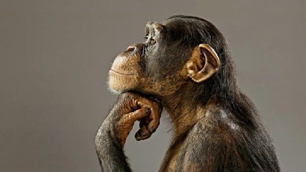 primates-780x438