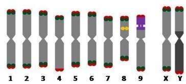 sexado-molecular