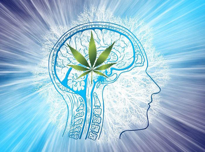 Un estudio demuestra que el cannabis medicinal alivia las convulsiones de la epilepsia infantil