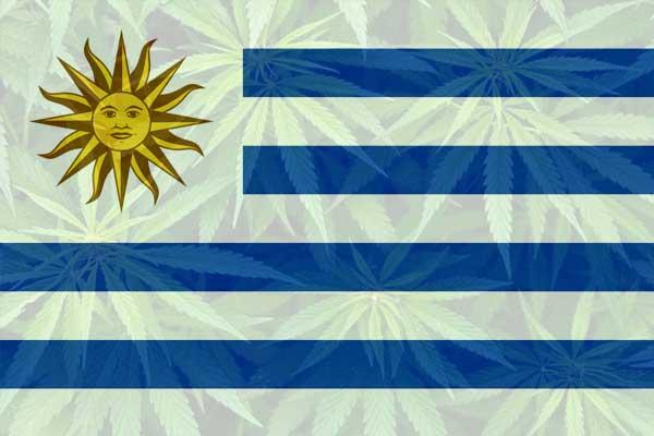 Uruguay aprueba nuevas reglas para facilitar las exportaciones, impulsar la industria del cannabis