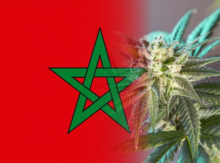 Ya llegó la legalización del cannabis medicinal a Marruecos