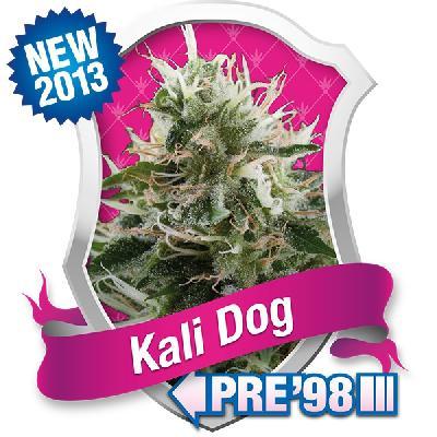 Kali Dog 5 Semillas
