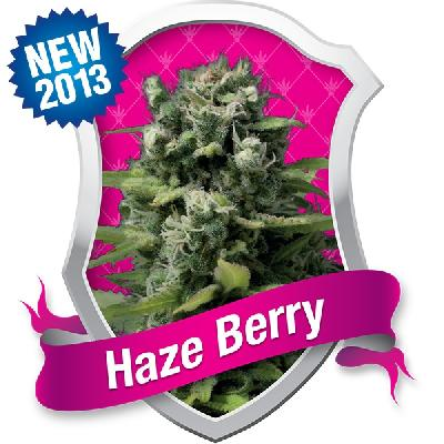 Haze Berry 5 Semillas