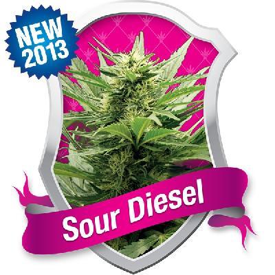 Sour Diesel 3 Semillas