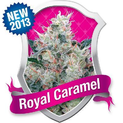 Royal Caramel 10 Semillas