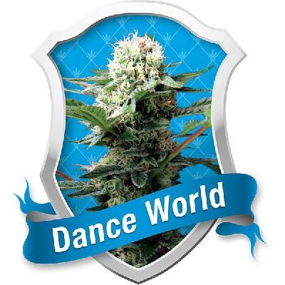 Dance World 1 Semilla