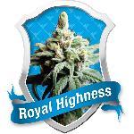 Royal Highness 1 Semilla