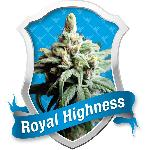 Royal Highness 5 Semillas