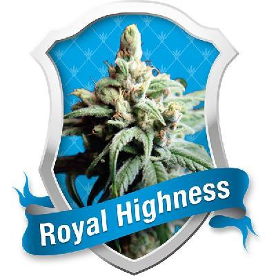 Royal Highness 10 Semillas