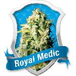 Royal Medic 10 Semillas