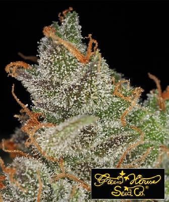 King´s Kush 10 Semillas