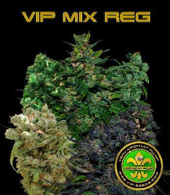 Vip Regular Mix 10 Semillas