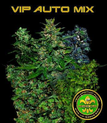 Vip Auto Mix 10 Semillas