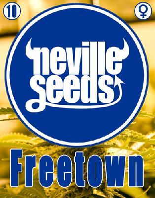 Freetown 10 Semillas