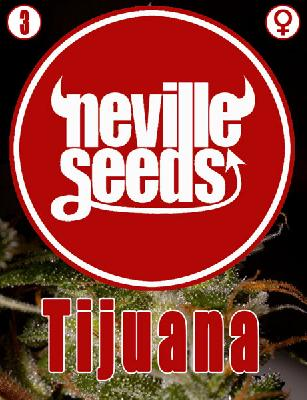Tijuana 3 Semillas